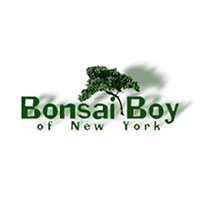 Bonsai Boy of New York Logo